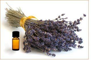 Aromatherapy-lavender1 (1)